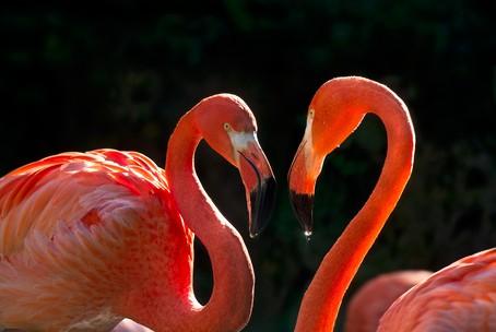Tiergarten Schönbrunn Valentinstagsaktion - zwei Eintrittskarten zum Preis von einer - nur am 14. Februar