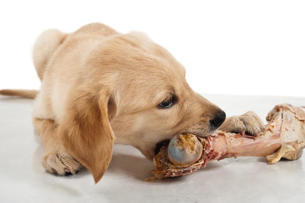 [AMAZON] 10€ Rabatt auf Hunde- und Katzenfutter/snacks ab 20€ Bestellwert