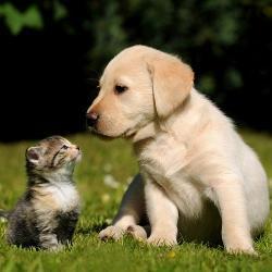 DM: Hunde und Katzenfutter im Abverkauf bis -40%