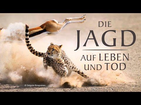 BBC Doku Serie - Die Jagd - Auf Leben und Tod (IMDb 9,3)