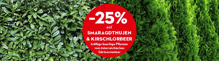 [Bellaflora] -25% auf Smaragdthujen und Kirschlorbeer