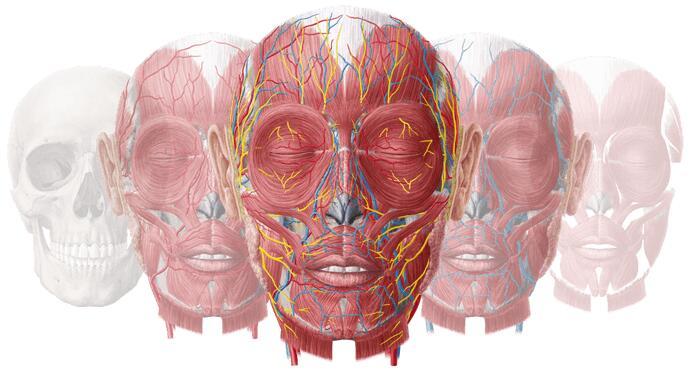 Über 70 Bände Anatomie Lernkarten eBooks von KENHUB gratis (iTunes/Kindle) inkl. Radiologie (MRT und CT) sowie Histologie.
