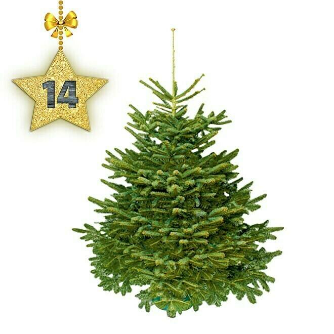 Nordmanntanne 150 - 175 cm, Weihnachtsbaum, Angespitzt