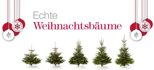 Amazon: Weihnachtsbaum mit garantierter Lieferung zum Fest bestellen
