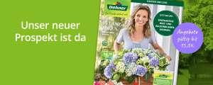 Dehner 10% auf alle Pflanzen