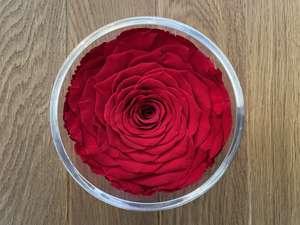 Valentinstag Special - 25% Rabatt auf Infinity Rosen (halten 3 Jahre!)