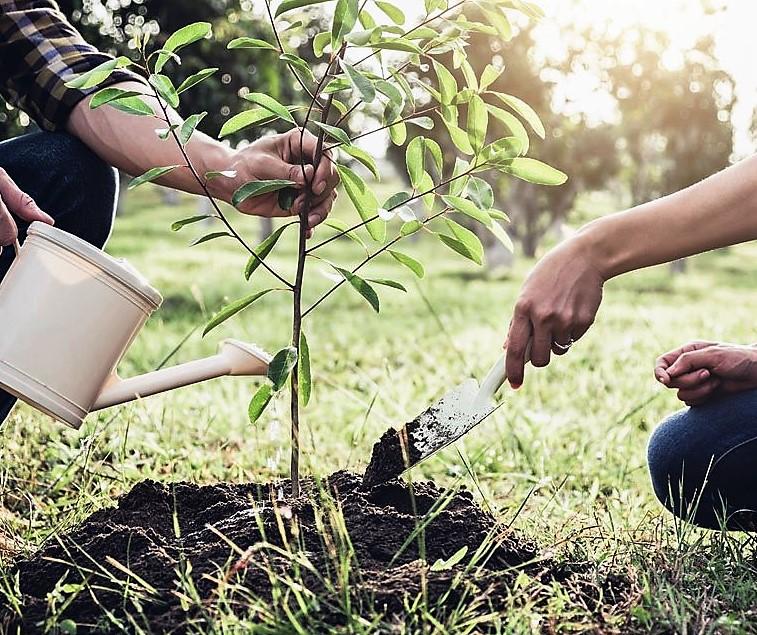 Weltumwelttag: Gratis Baum pflanzen über growmytree
